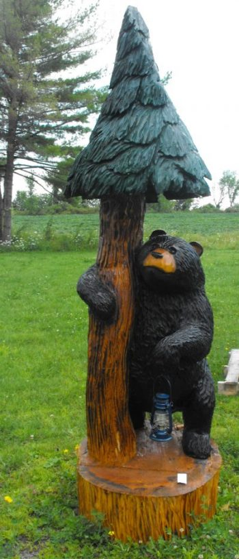 pine tree bear